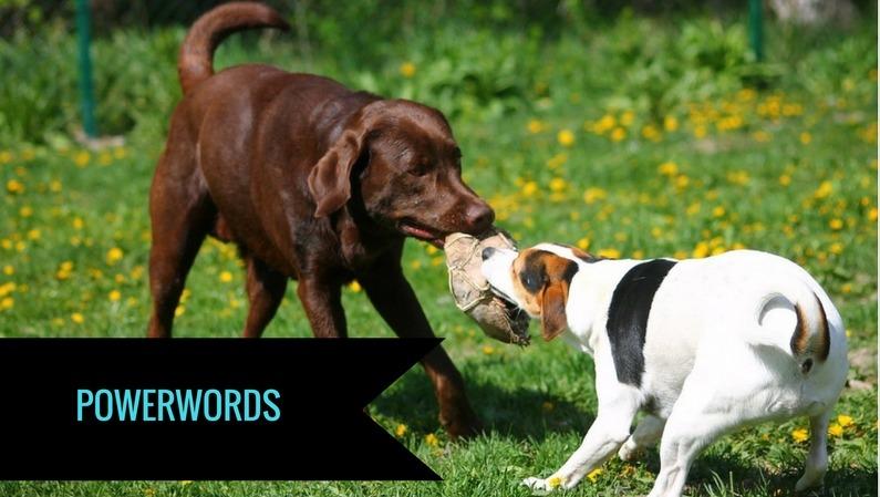 Powerwords er ord, der påvirker læseren på et emotionelt niveau. De sætter gang i følelser, tanker, overvejelser