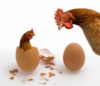 Kom hønen før ægget