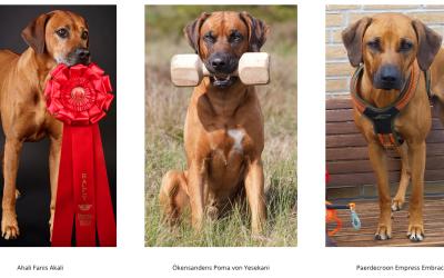 Minikursus i at ensrette billeder til web